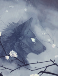 rain 2016